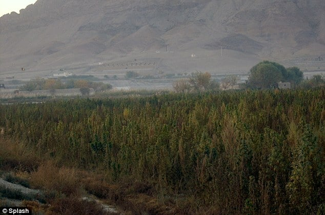 Regione di Kandahar, Afghanistan 2010