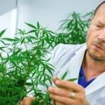 La cannabis potrebbe aiutare a curare e prevenire Covid-19?