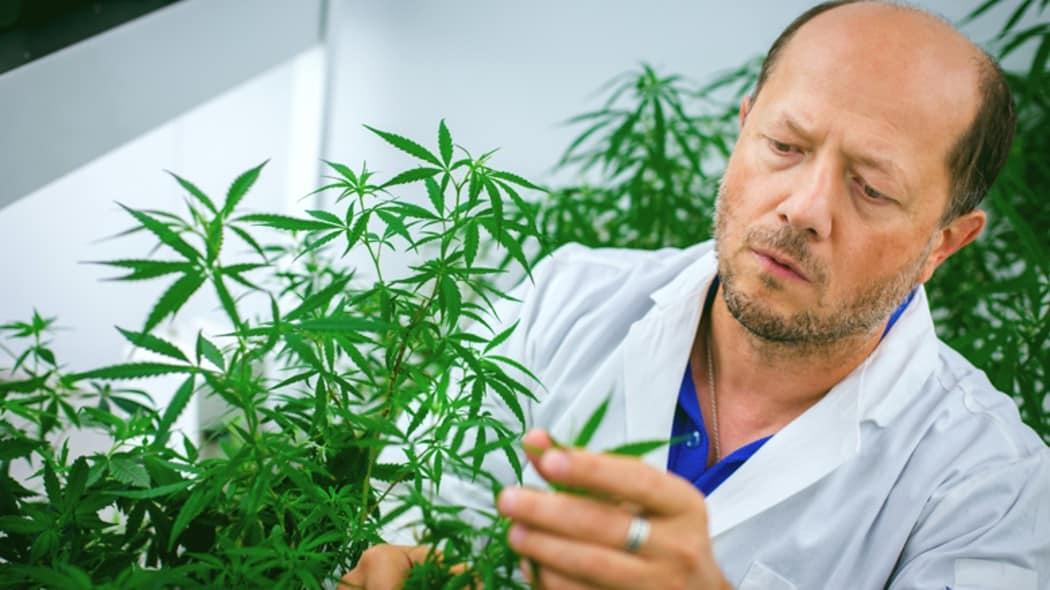 You are currently viewing La cannabis potrebbe aiutare a curare e prevenire Covid-19?