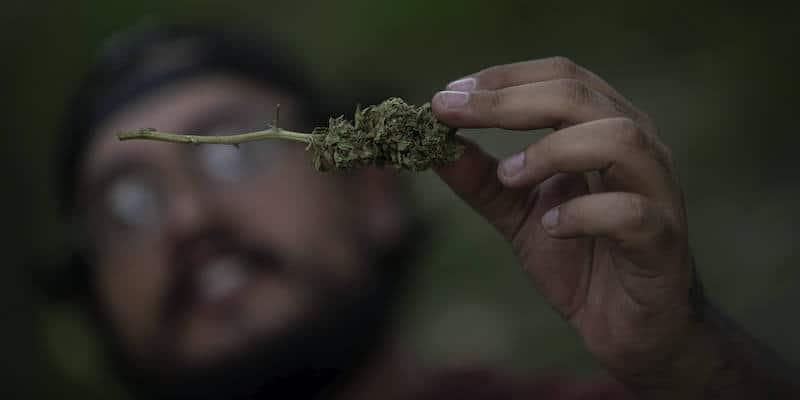 You are currently viewing Il Messico sta per legalizzare la marijuana, con qualche polemica