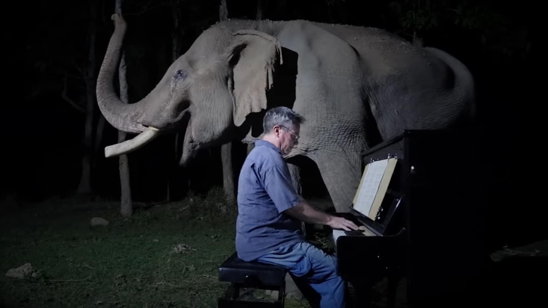 """""""Sonata al chiaro di luna"""" di Ludwig Van Beethoven, per un vecchio elefante!"""