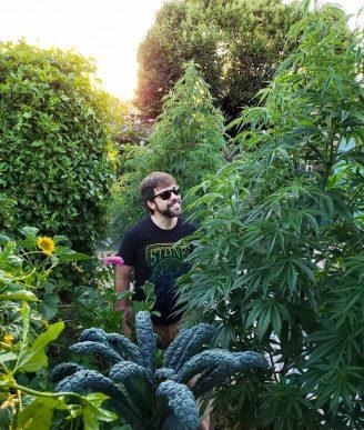 Read more about the article Semi di cannabis light: ecco come coltivarli in modo legale
