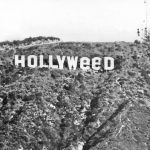Hollyweed!