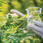 CBD: La ricerca stabilisce il potenziale antibiotico per la molecola della cannabis