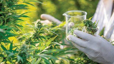 Read more about the article CBD: La ricerca stabilisce il potenziale antibiotico per la molecola della cannabis