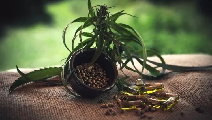 Cannabis light medica, realtà per un italiano su quattro