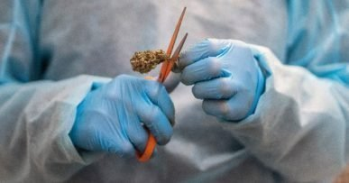 """Cannabis in medicina, la scoperta tutta italiana che può rivoluzionare il settore: """"Nuova classe di cannabinoidi utilizzabile in varie patologie"""""""