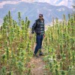 Perché il Marocco vuole legalizzare la cannabis per uso terapeutico