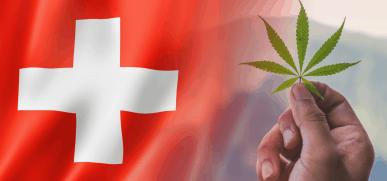 SVIZZERA – Cannabis terapeutica. Cbd in terapia anticancro