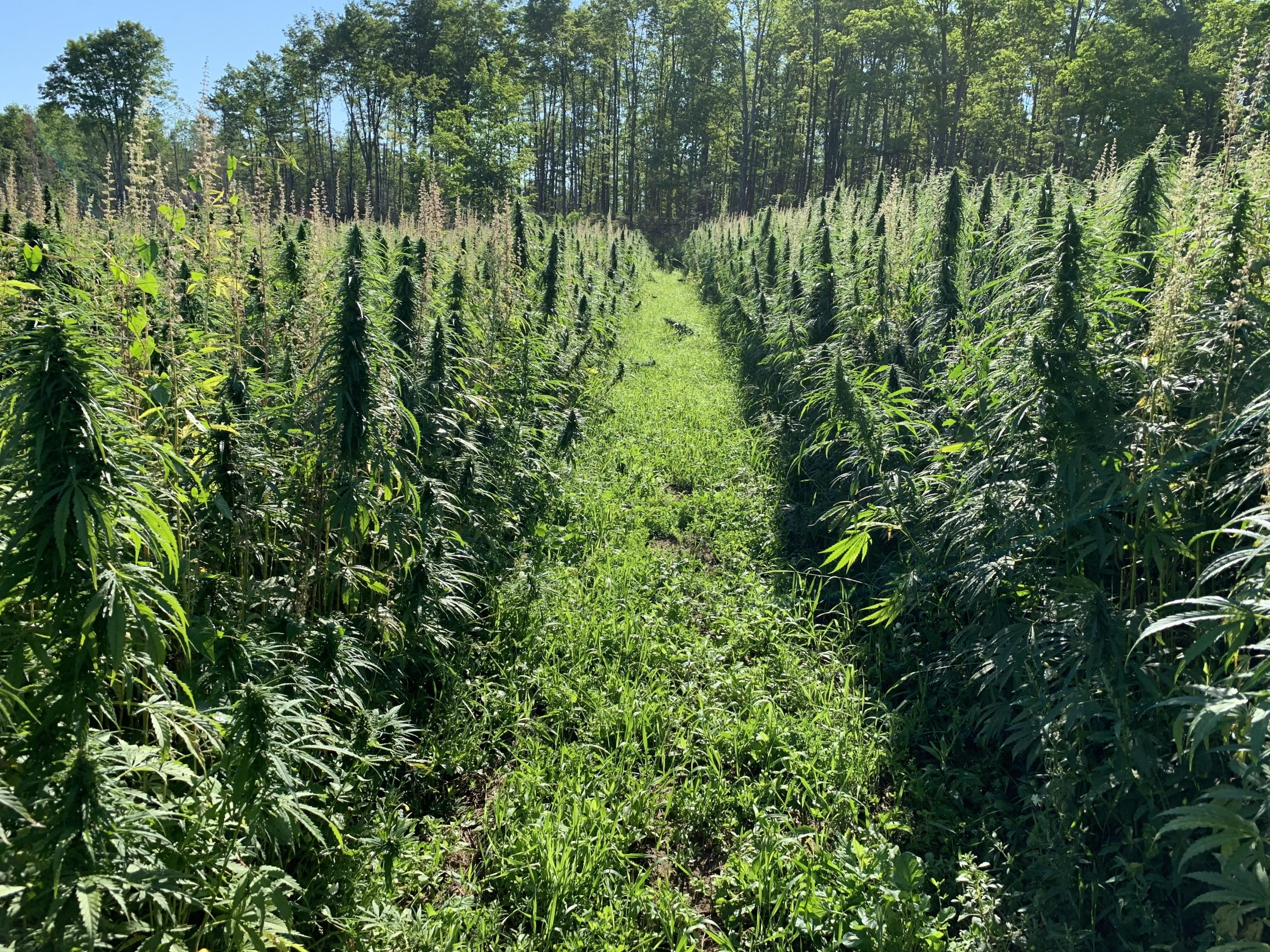 You are currently viewing Cannabis: sì alla depenalizzazione?