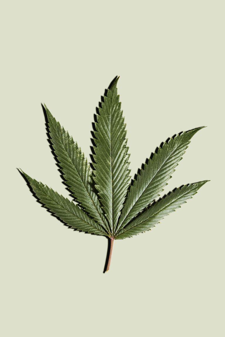 You are currently viewing Tutto quello che devi sapere sulla cannabis, e forse non sai