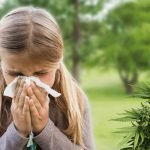 Il CBD riduce i sintomi dell'allergia?